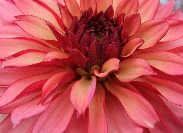 Awesome Blossom