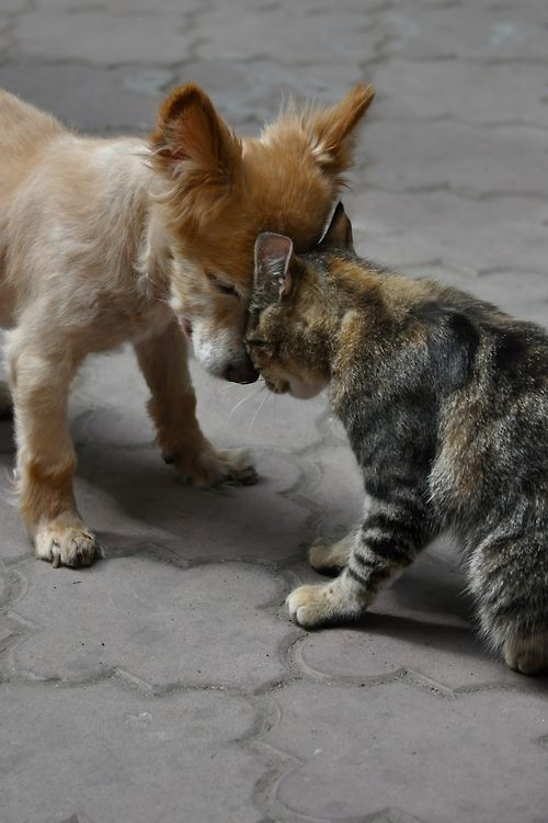Unusual animal friendship …… cat and …