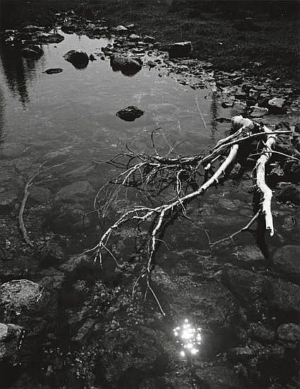 ADAMS, ANSEL (1902-1984) Untitled (branch and creek).