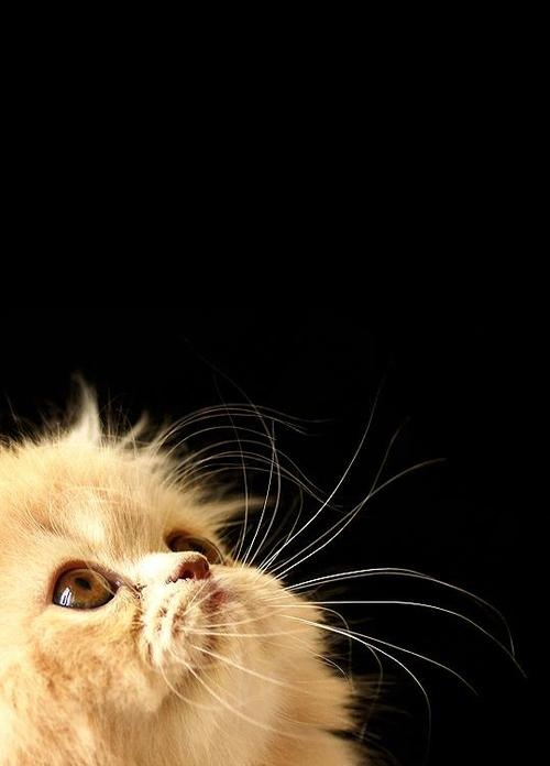 <3: Cat Kittens, Kitty Cat, Cat Women, Cute Pet, Gorgeous Kitty, Beloved Creatures, Kitty Kitty, Cat Pictures, Furry Friends