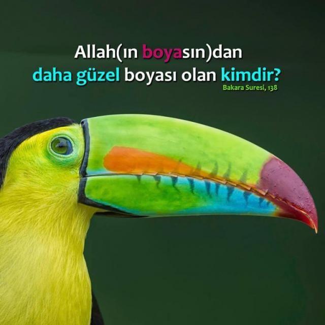 Allahın boyası... Allah(ın boyasın)dan daha güzel boyası olan kimdir? Biz (yalnızca) Ona kulluk edenleriz. [Bakara Suresi, 138]