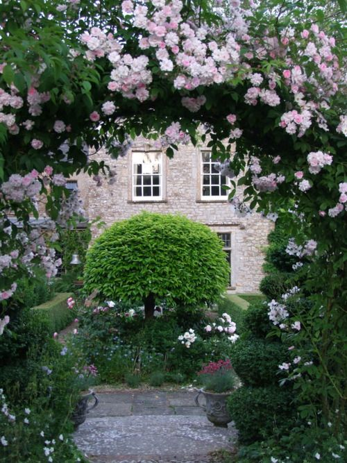 Rose arch in June (Rosa Felicité et Perpetue) - The Old Rectory Garden | Netherbury, Dorset