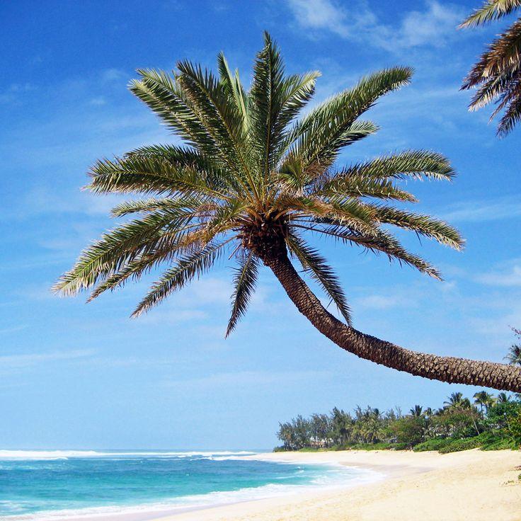 Palm Tree Wallpaper | Lonely Palm Tree iPad Wallpaper, Background, 1024x1024 | nba playoff ...