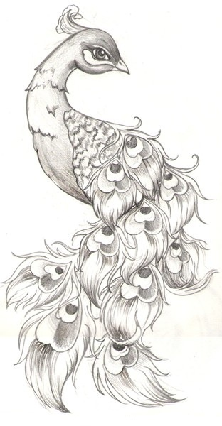 Awesome drawing of Peacock! | Tattoo ideas | Pinterest ...
