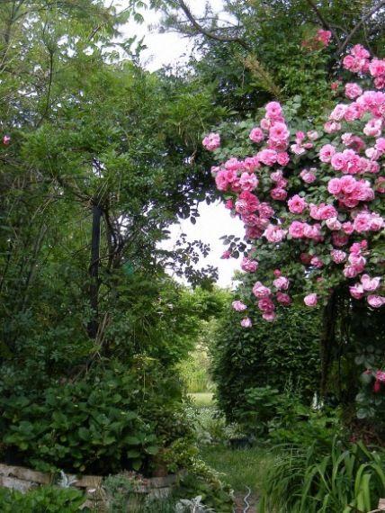 Nyári munkák a rózsakertben - gazigazito.hu