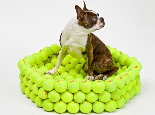 Check out this upcycled dog bed made from tennis balls- Now he can chew himself to sleep in the comfort of his doggie bed!