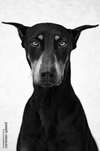 Beautiful black dog