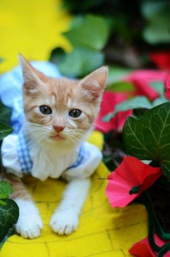 Kitten Costumes to Boost Adoptions