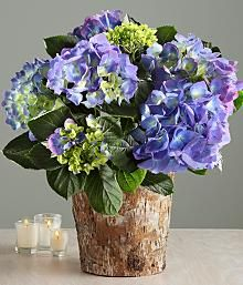 proflowers hydrangea