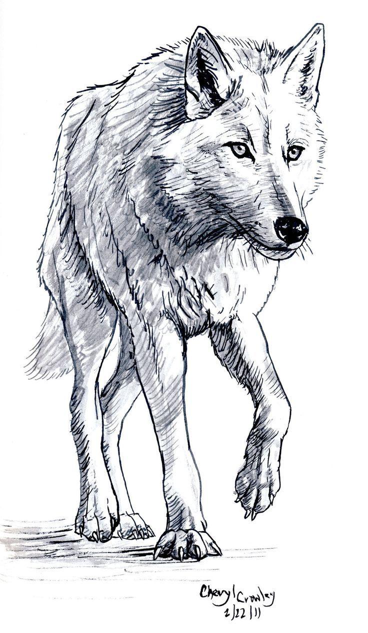 White Wolf von silvercrossfox.de … auf @DeviantArt – #KohleZeichnungakt #Kohle …