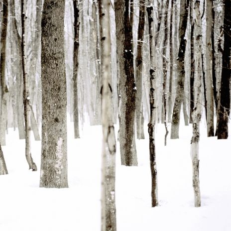 La forêt des blancs flocons