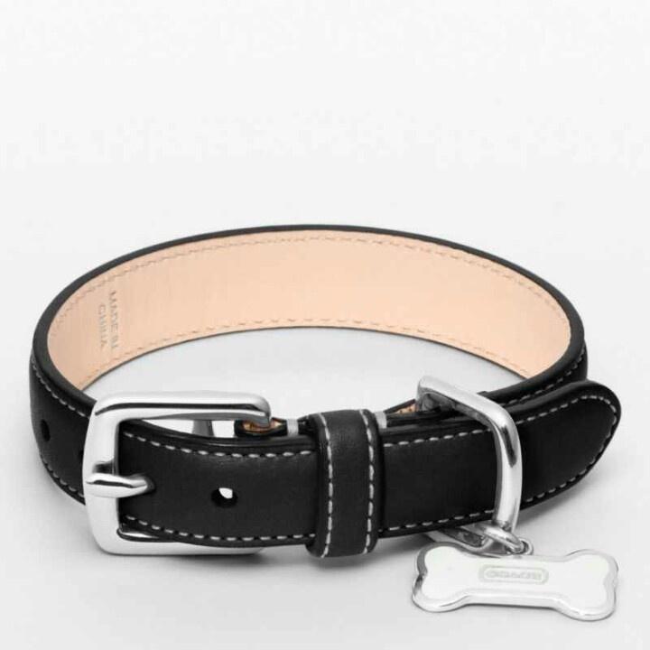 Coach Dog Collar