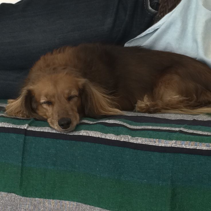 Maggie sleeping.