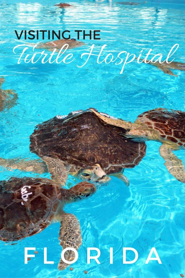 Guide and tips for visiting the Turtle Hospital in the Florida Keys with kids