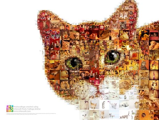 A large photo collection of cats in the My Dear Ginger Friend Collage
