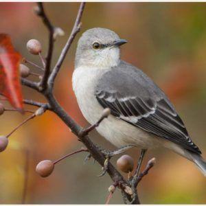 English Sparrow Wallpaper | english sparrow wallpaper 1080p, english sparrow wallpaper desktop, english sparrow wallpaper hd, english sparrow wallpaper iphone