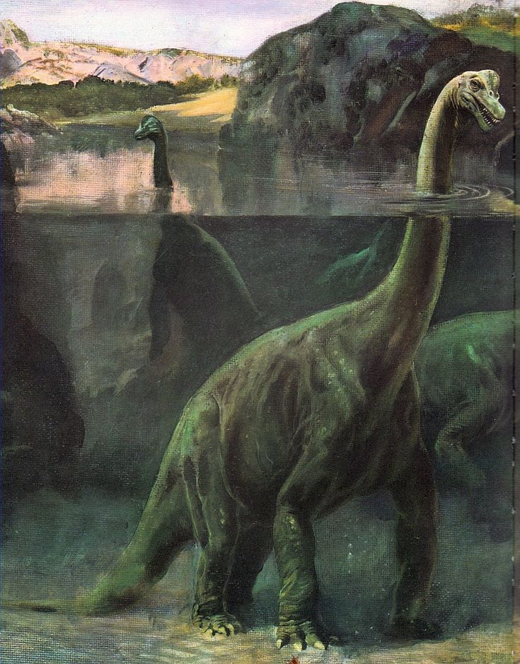 Brachiosaurus; Late Jurassic (154-153 Ma); Discovered by Riggs, 1903; Artwork by Charles R. Knight; Note: Probably not the correct habitat.