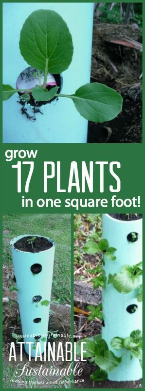 Can you manage to find 12 square inches in which to garden? Look what you can do! By taking your vegetable garden vertical, you can grow a lot in just a little space!