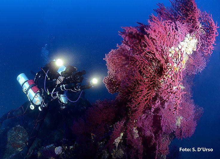 Diving Club ecosostenibile Sardegna:scuba point