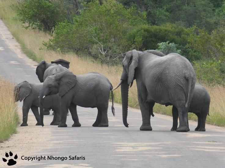 Herd of elephants on the road