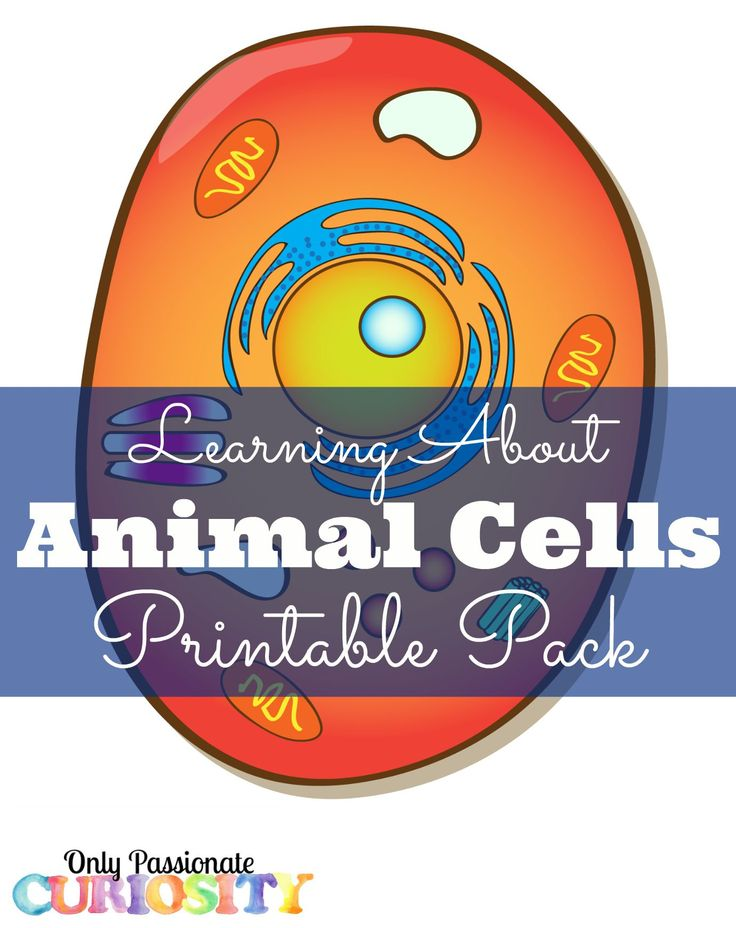 best 20+ plant cell organelles ideas on pinterest | animal cell ... - Animal Cell Coloring Page Answers