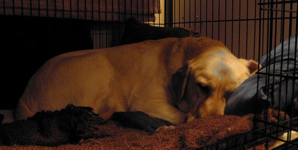 Read THE ULTIMATE GUIDE to CRATE TRAINING from LTHQ by clicking this link: http://www.labradortraininghq.com/labrador-training/crate-training-complete-guide/