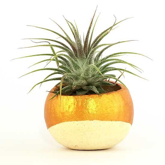 cupa naturala mica plante aeriene