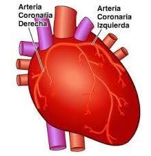 Resultado de imagen de que es el corazon