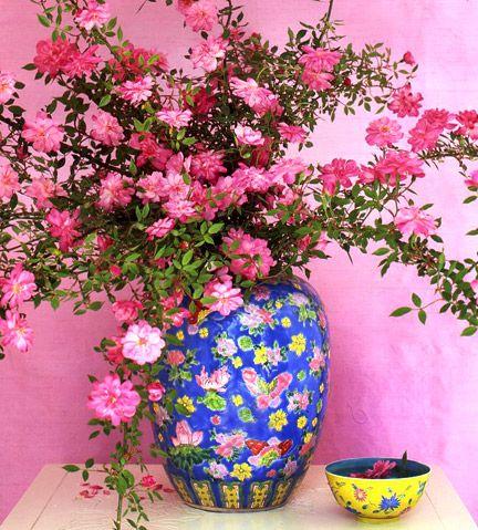'Rouletii' rose in a ginger jar