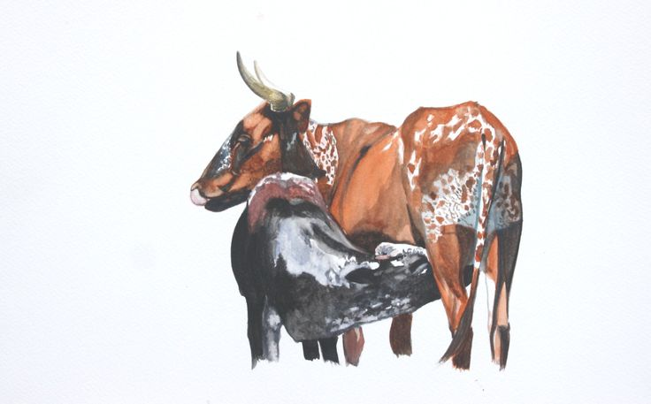 Water colour Nguni Cow painting by Tess Reid's Fine Art