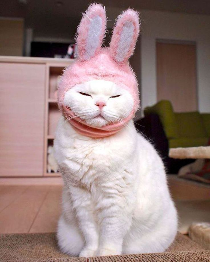 Rabbit cat? #cats #rabbits #cuteanimals