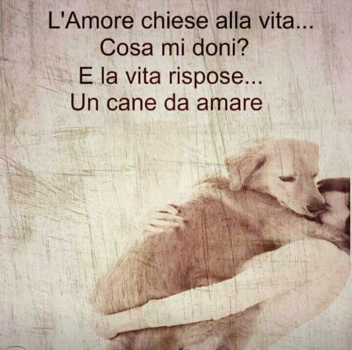 Un cane da amare