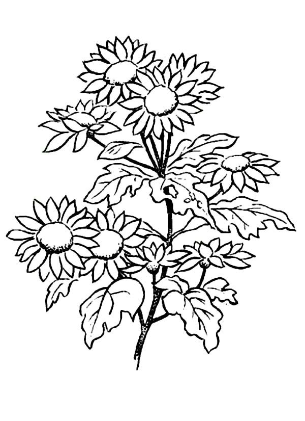 Daisy Coloring Pages Best Coloring Pages For Kids Picture Of Daisy Flower Printable Flower Coloring Pages Flower Coloring Pages