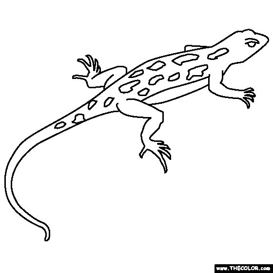 137 best images about animal coloring book on pinterest for Gecko lizard coloring pages