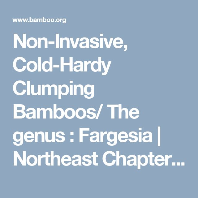 Non-Invasive, Cold-Hardy Clumping Bamboos/ The genus : Fargesia | Northeast Chapter of the American Bamboo Society