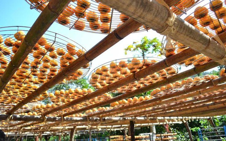 I Kaki (persimmon): un'elenco delle Cultivar nel mondo. www.divanosrl.it #kaki #persimmon