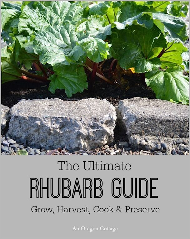 The Ultimate Rhubarb Guide: Grow, Harvest, Cook & Preserve - An Oregon Cottage