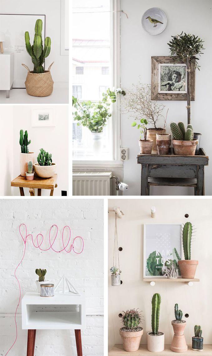 cactus en el baño