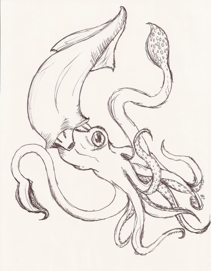 86 best giant squid octopus ship images on pinterest for Giant squid coloring pages