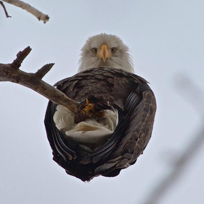 прикольные картинки с восхищением о птице орел раз выкладывал