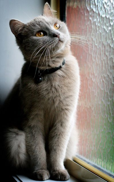 89cats:  Pondering life by Liana Horton on Flickr.