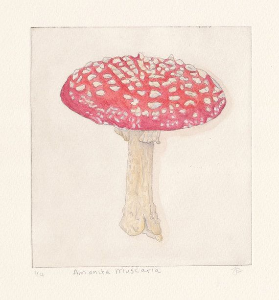 Amanita Muscaria by JessicaParkerArt on Etsy