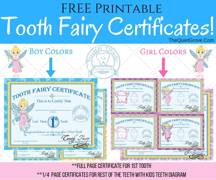 Printable Boy Tooth Fairy Certificate Tooth Fairy Pinterest Tooth