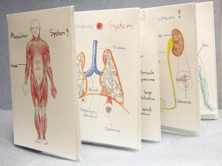 119 Best Human Body Images On Pinterest School The Human Body And