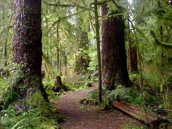 translationstop.com travel-caravan-north-america pics share-a-ride-old-growth-forest.JPG