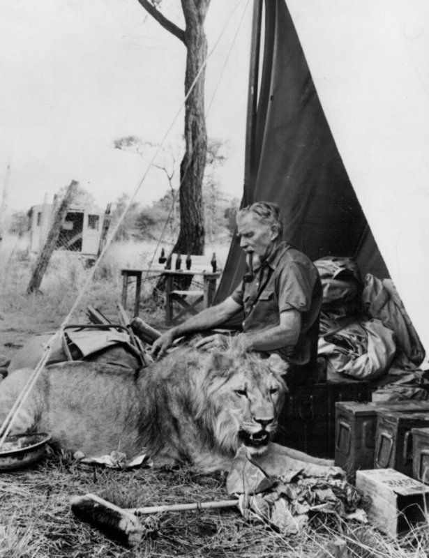 """George Adamson (Baba ya Simba, """"Father of Lions"""" in Swahili). Wildlife conservationist known through the film """"Born Free"""" – the story of Elsa, an orphaned lion cub George and his wife, Joy, had raised and later released into the wild. George was murdered by poachers in 1989."""