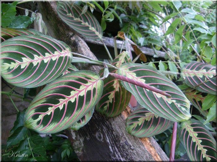 Plante exotique int rieur une petite plante d 39 int rieur for Plantes exotiques d interieur