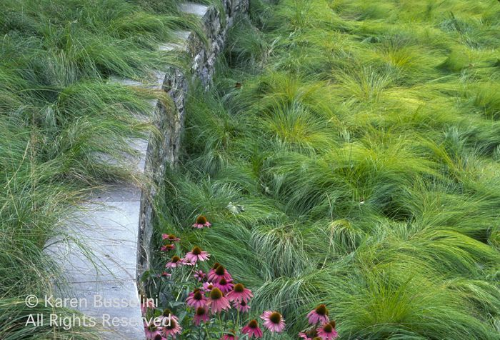 Grass Seed For Shady Areas In Texas