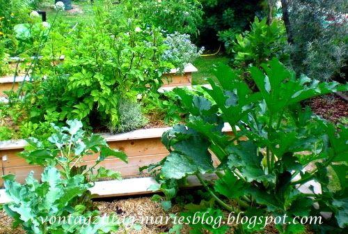 Hochbeet im Juni. Zucchini, Kartoffeln und vieles mehr.  @vontagzutagmari http://vontagzutag-mariesblog.blogspot.com
