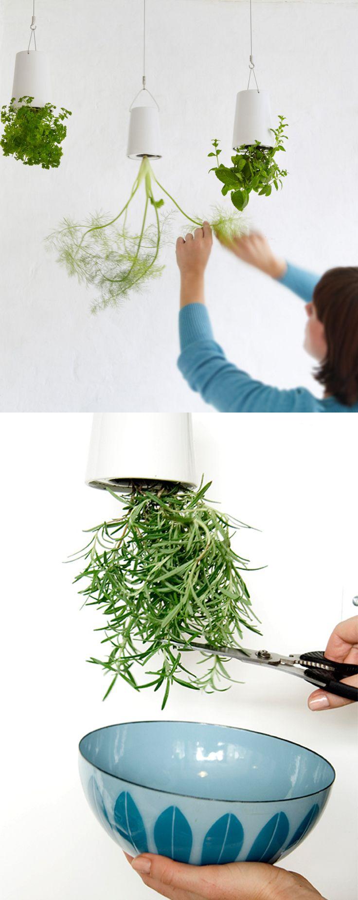 Hydroponics Herb Garden Kitchen 17 Best Images About Kitchen Garden On Pinterest Gardens